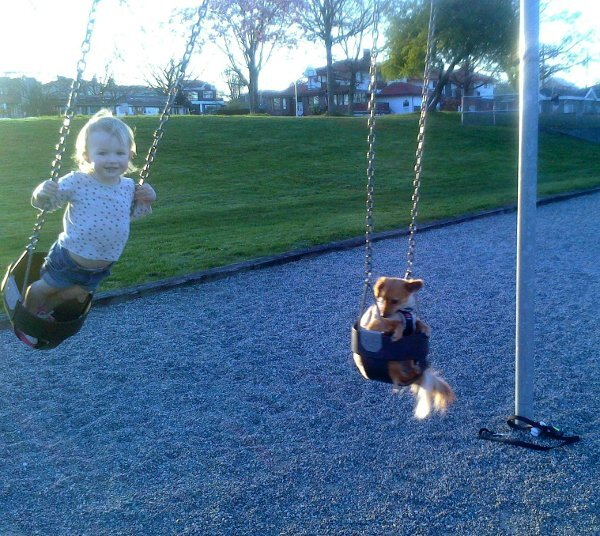 Cute dogs - part 235, cute dog picture, best funny dog, dog photos