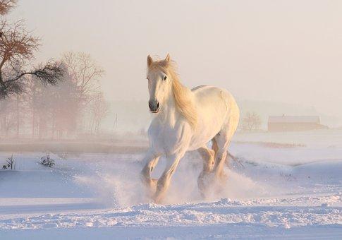 أركض وحدي فوق الثلوج