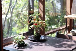 山野草盆栽教室 睦草の10月のアトリエ風景