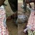 Ular Ditangkap & Dibelah Perutnya Kerana Disyaki Telan Anak Lembu, Rupa-rupanya Bunting