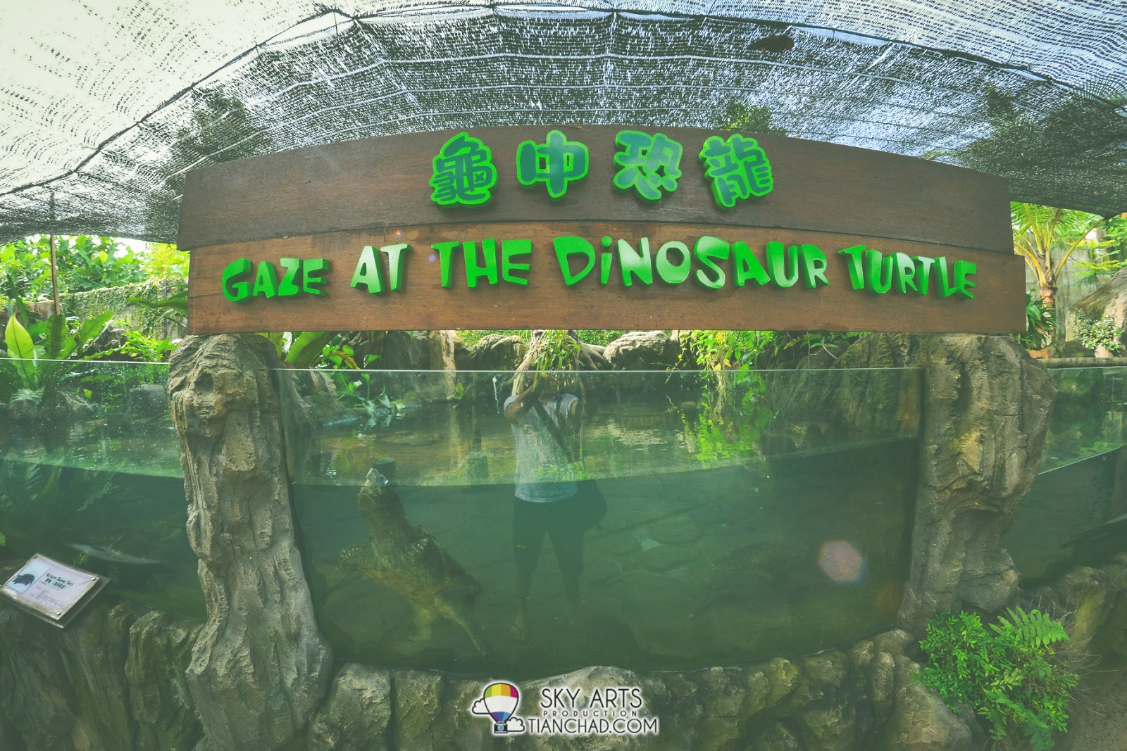 Dinosaur turtle in the aquarium, looks kinda antique