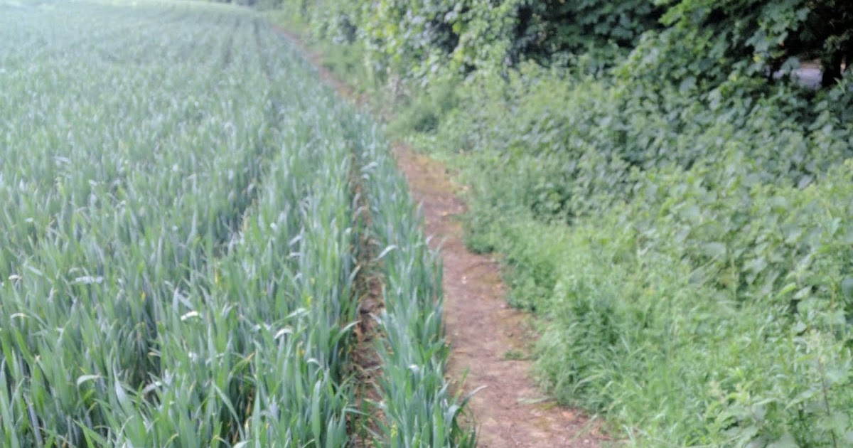 Banstead Botany Blog: Arable extension