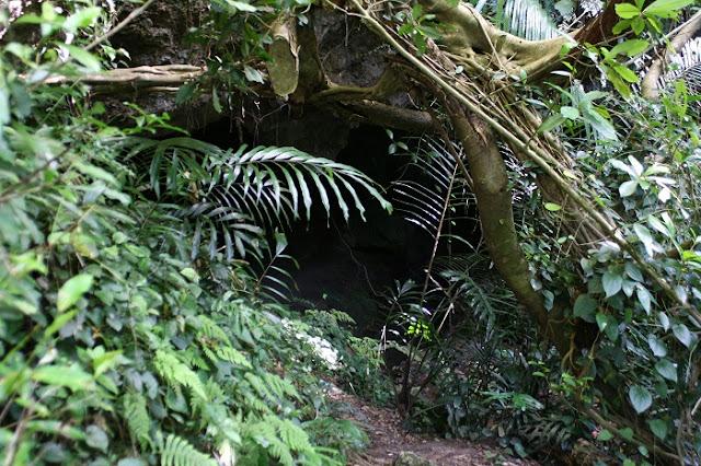 シムクガマの写真