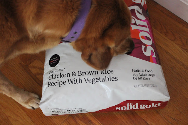 Solid Gold Chicken and Brown Rice dog food review