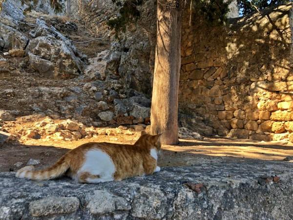 faliraki cats