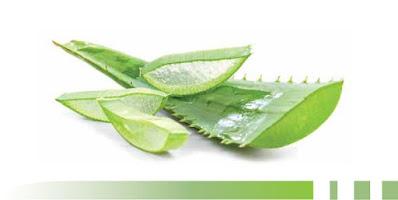Posso prendere l'Aloe Arborescens anche se godo di buona salute