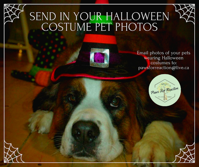 October featured pets: Send in a photo of your pet wearing a Halloween costume to be featured on Paws For Reaction