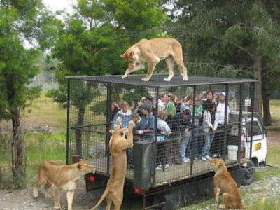 Arena Bermain Taman Safari bogor