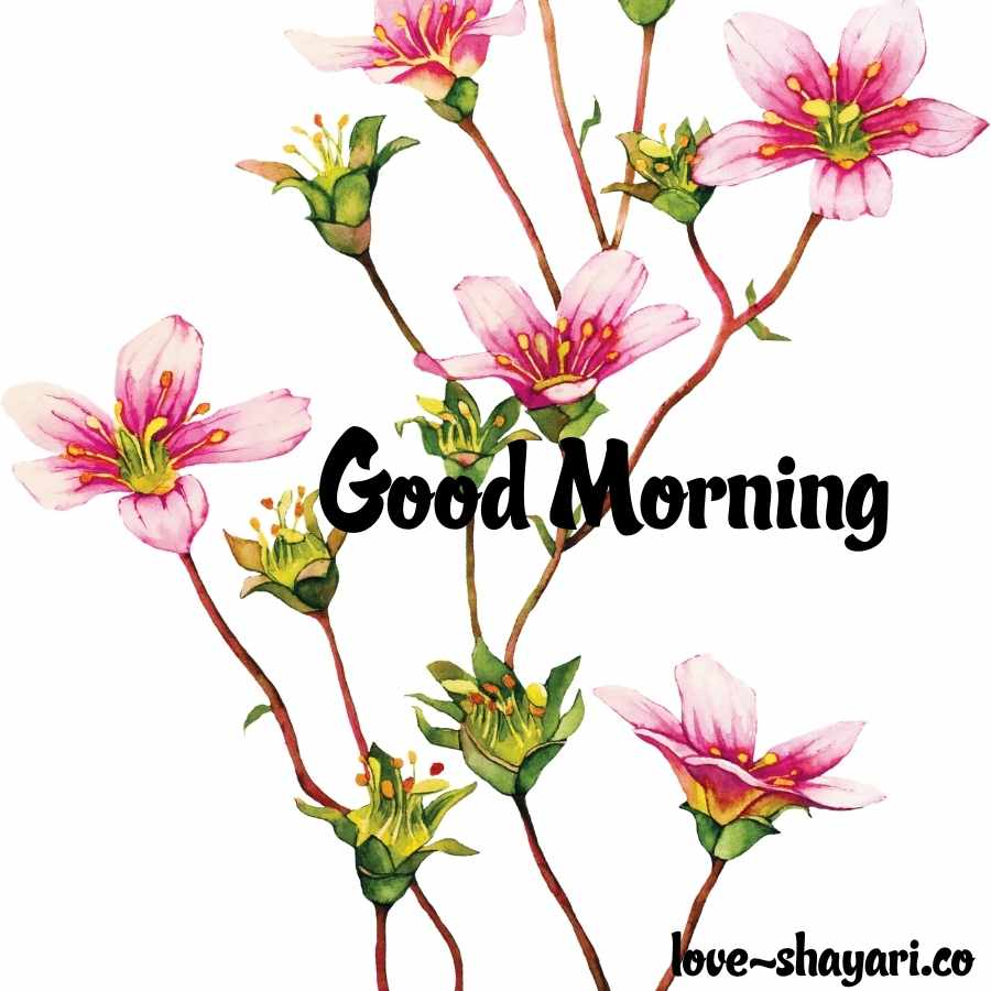 good morning nature image