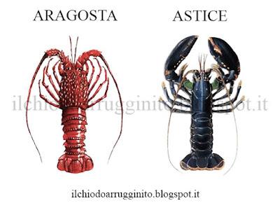 Qual è la differenza tra aragosta e astice?