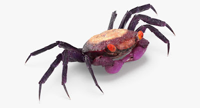 What do Vampire Crabs Eat / Vampire Crab For Sale