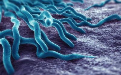 طرق بسيطة لاستعادة البكتيريا المعوية الطبيعية