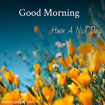 wishes good morning images for flower images