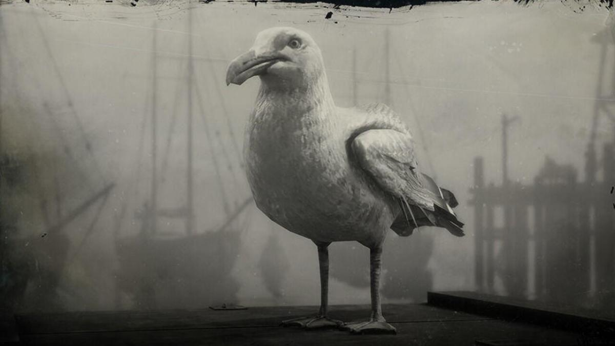 Where to find seagulls in Red Dead Online and what types you can hunt