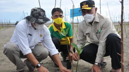 Mangrove Berfungsi Ganda untuk Mitigasi dan Mendukung Perekonomian Pesisir