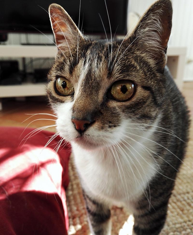 Maline, the cat (19/04/2001 - 16/08/2017)