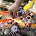 Inilah Beberapa Kelompok atau Golongan Ikan Berdasarkan Jenis Tipe Makannya