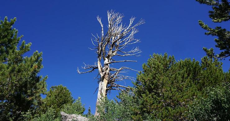Backpacking Great Basin National Park: Day 3