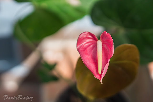 flor-o-planta-que-quieras-fotografiar