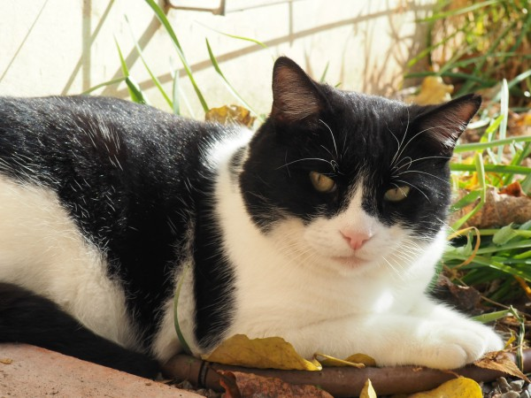 alhambra gatos