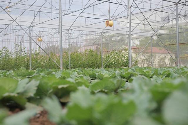 FLC Vĩnh Phúc Resort - Eco Farm 01