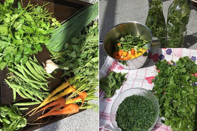 Buschbohnen, Schnittlauch, Karotten