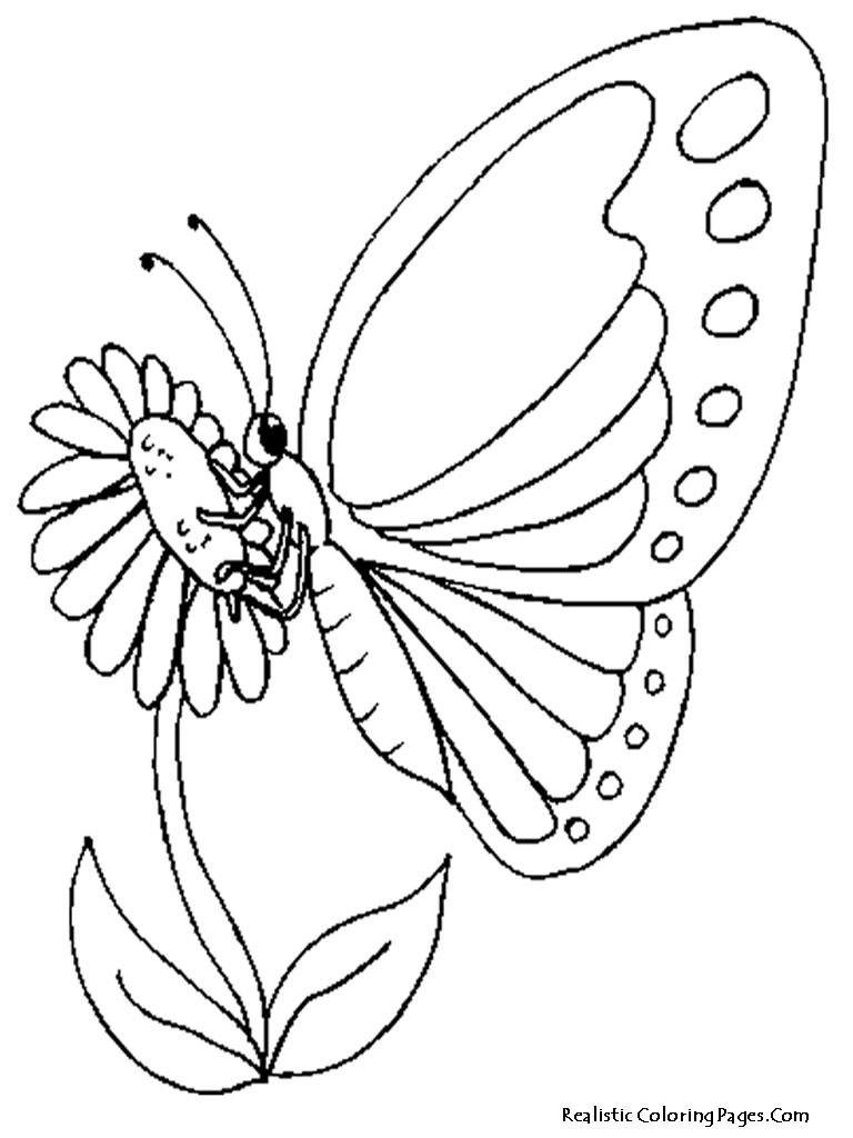 butterflies and flowers coloring pages - realistic butterfly coloring pages realistic coloring pages