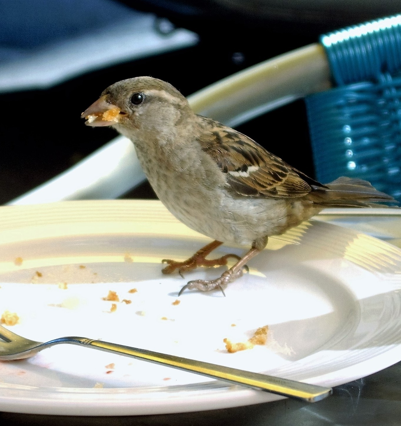 Picture of a sparrow foraging for food.