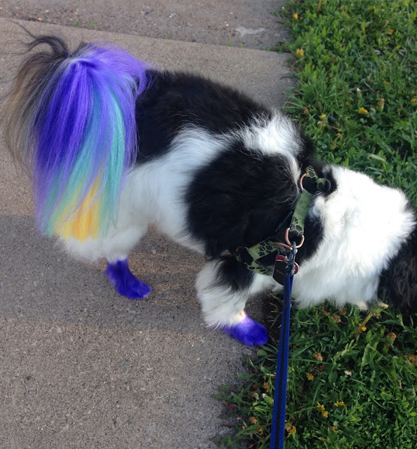 Color dye dog ideas