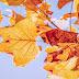 Consigli e abitudini sane da avere in autunno