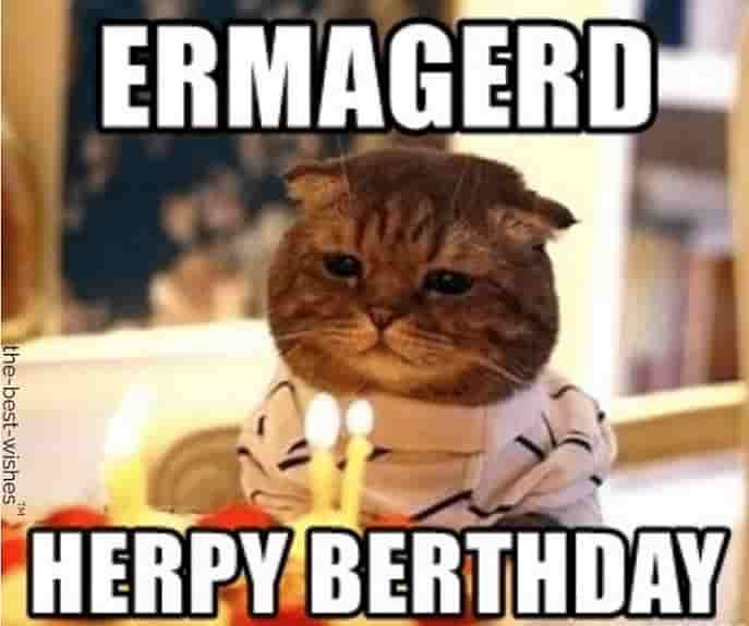 random cat funny memes saying herpy berthday