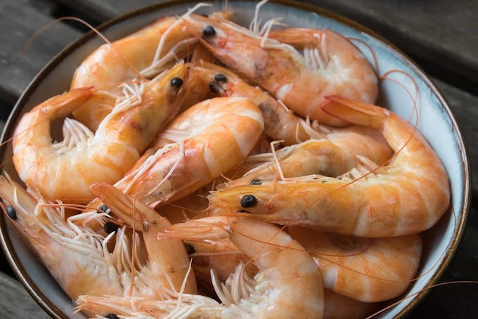 Can Dogs Eat Shrimp | Is Shrimp Good For Dogs