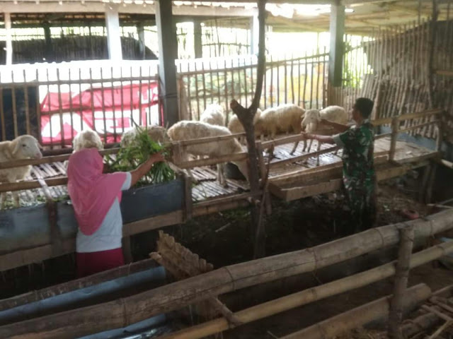 KodimKaranganyar - Mempererat Tali Silaturrahmi, Babinsa Komsos Dengan Peternak Kambing