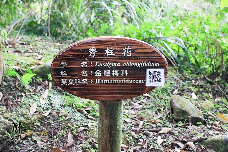 [南投賞楓銀杏] 溪頭自然教育園區