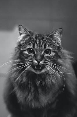 Gambar Wallpaper WA Bertema Kucing Lucu