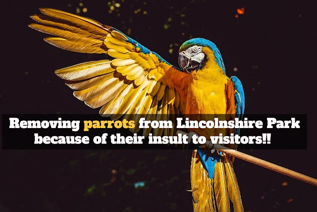 Removing parrots from Lincolnshire Park because of their insult to visitors!!