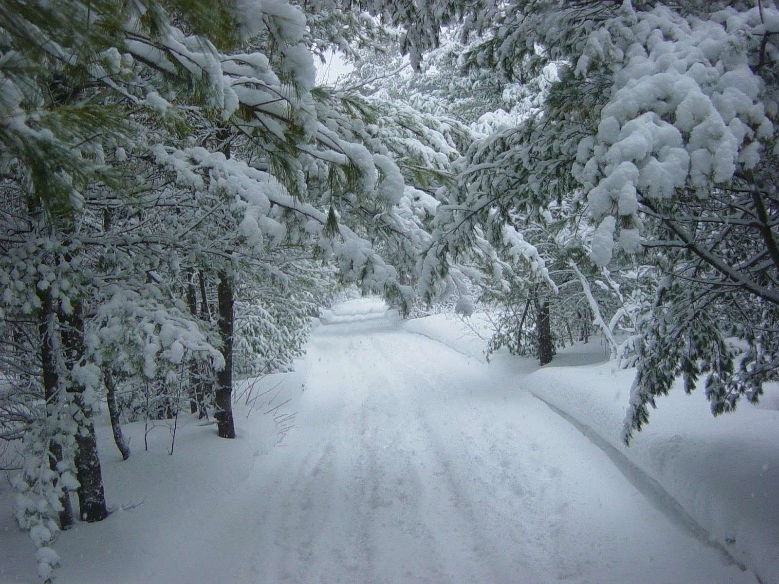 a snowy road weaves through a forest covered in snow