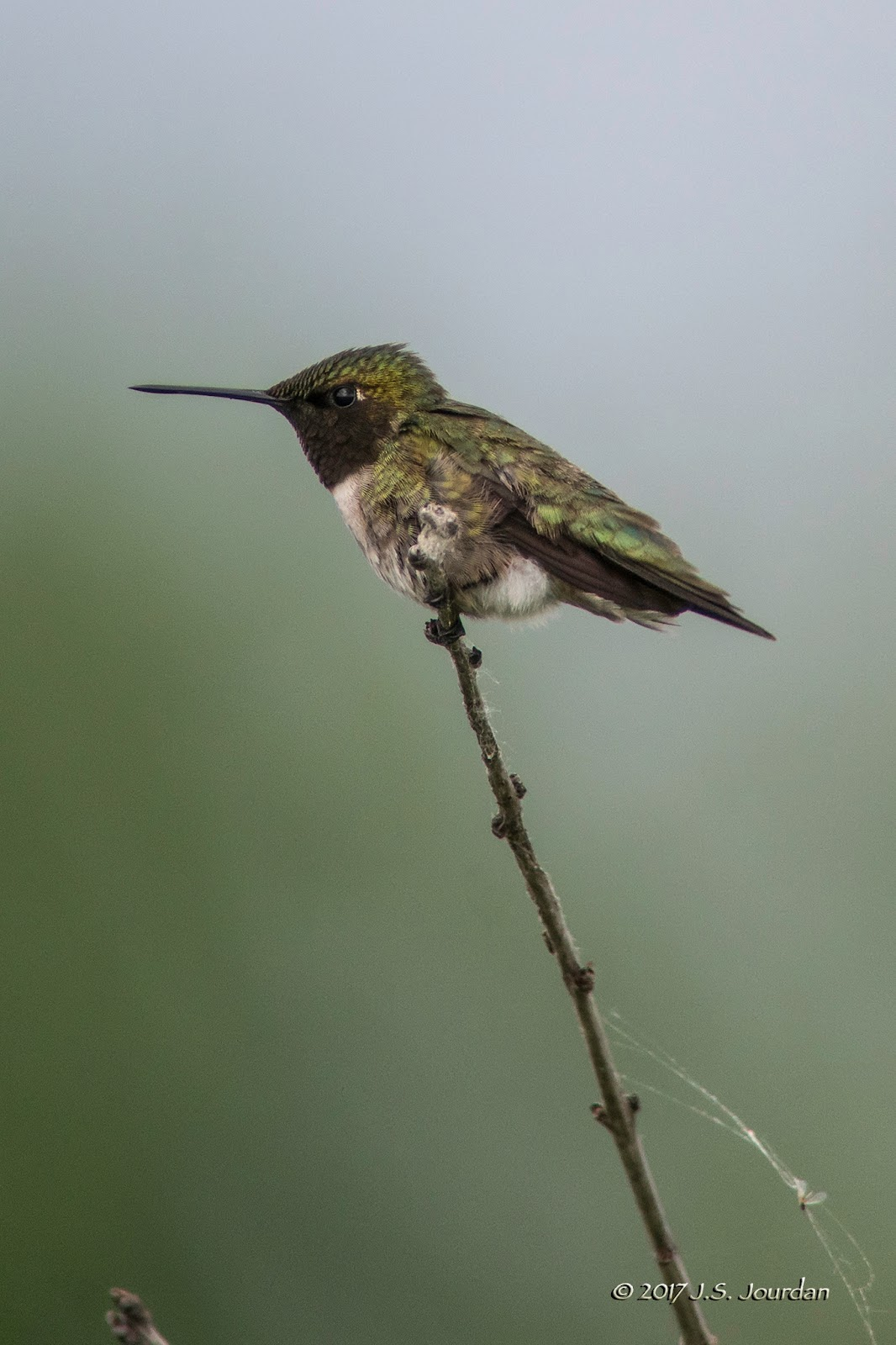 jerry's birding / digiscoping blog: conservancy farm grasslands