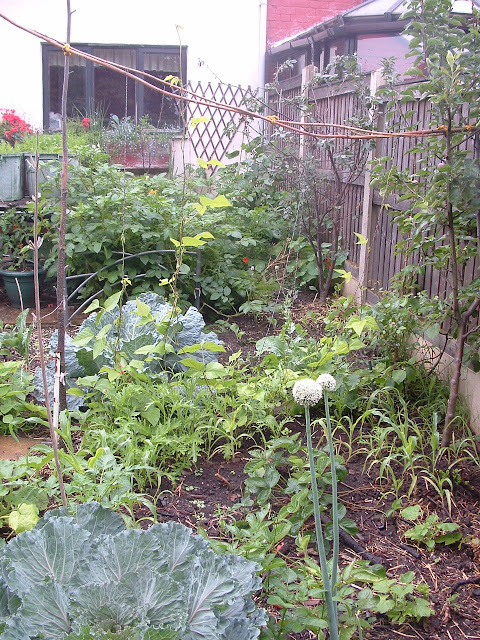 A garden bed packed with different vegetables, including cabbage, beans and potatoes