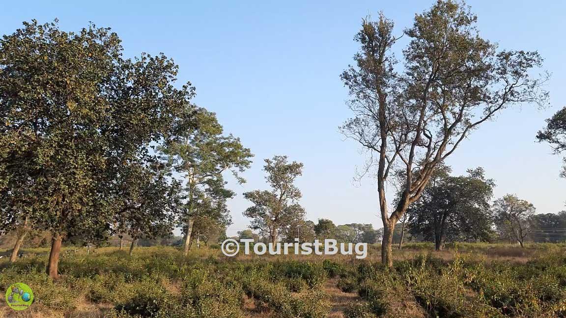 Dehradun tea garden