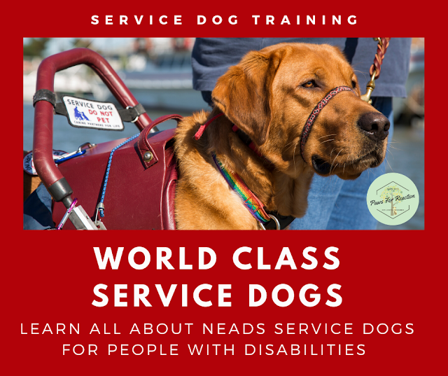 Helping paws: Training service dogs for people with disabilities means maintaining health
