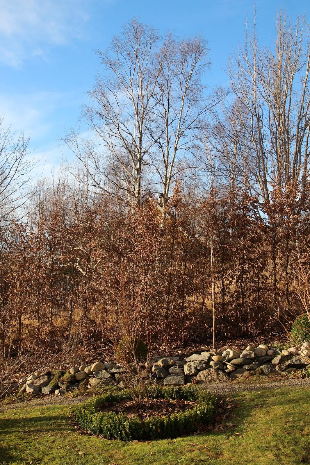 trädgård blogg