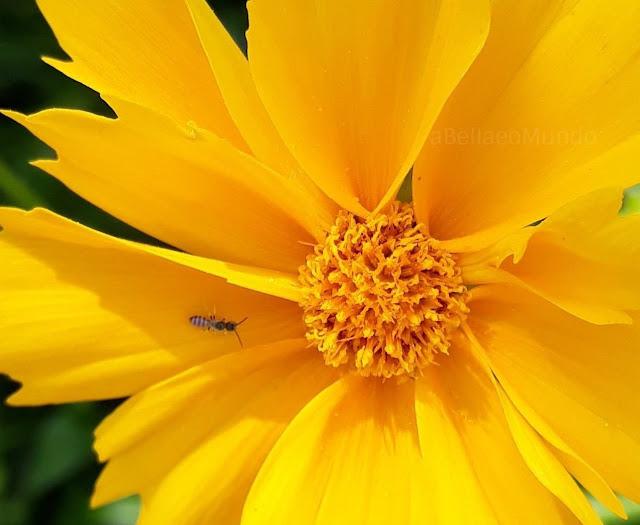 a Bella e o Mundo -  natureza amarela