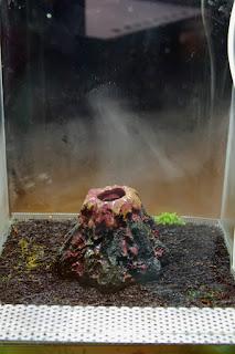xaxim w terrarium