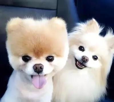 En Güzel Erkek ve Dişi Köpek İsimleri Listesi