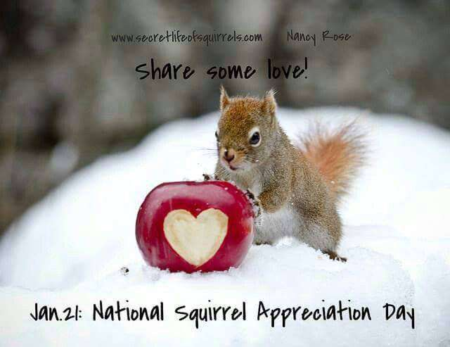 National Squirrel Appreciation Day Wishes Unique Image