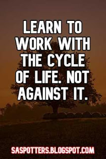 Learn to work with the cycle of life - not against it.