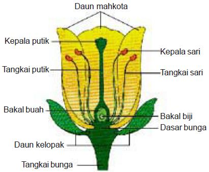 Bagian-bagian bunga sempurna