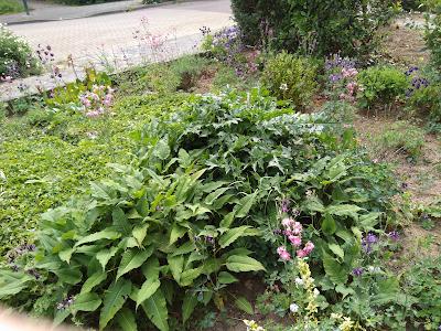 Akelei bloemen in de tuin van Atelier de Vier Jaargetijden