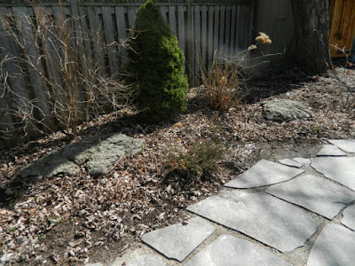 Leslieville Back Yard Spring Cleanup Before by Paul Jung--a Toronto Organic Gardener